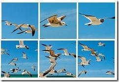 aves8