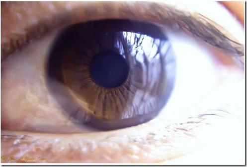 closeup14