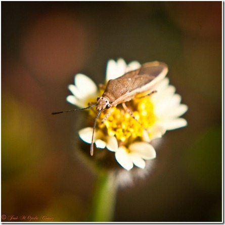 insecto1