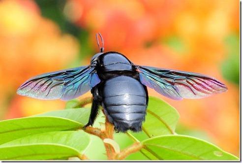 insectos11