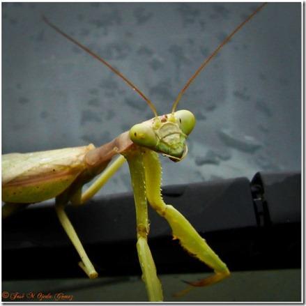 insectos9