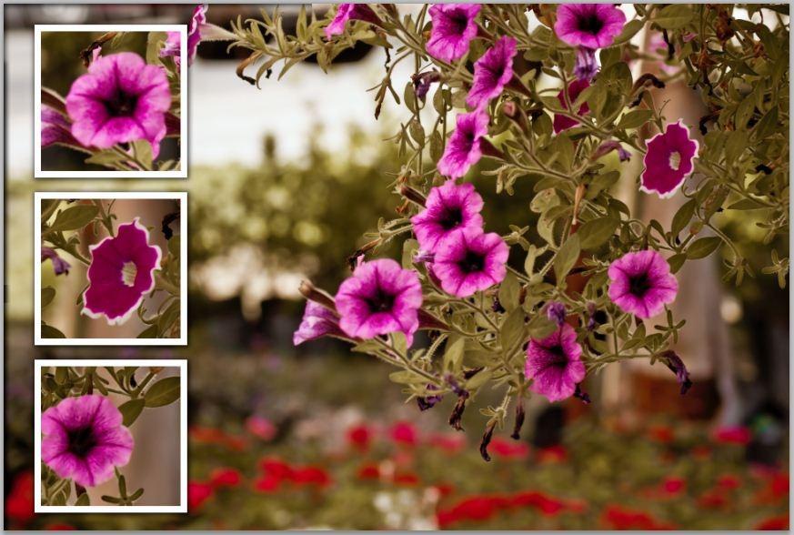 Plantillas con photoshop | Fotografia para principiantes