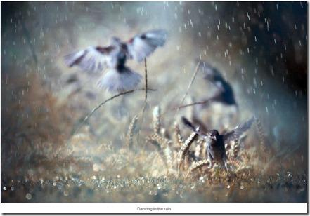 rain13