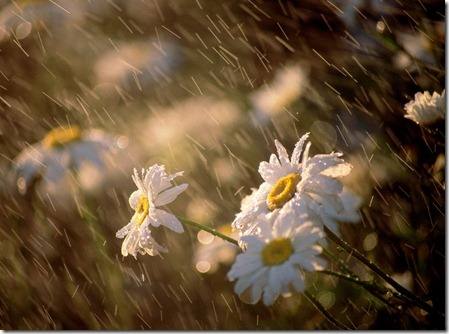 rain14